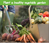 Plant a healthy vegetable garden