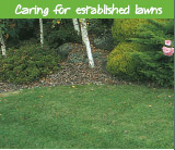Caring for established lawns