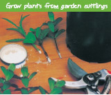Grow plants from garden cuttings
