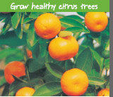 Grow healthy citrus trees