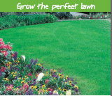 Grow the perfect lawn