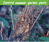 Control common garden pests