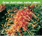 Grow Australian native plants
